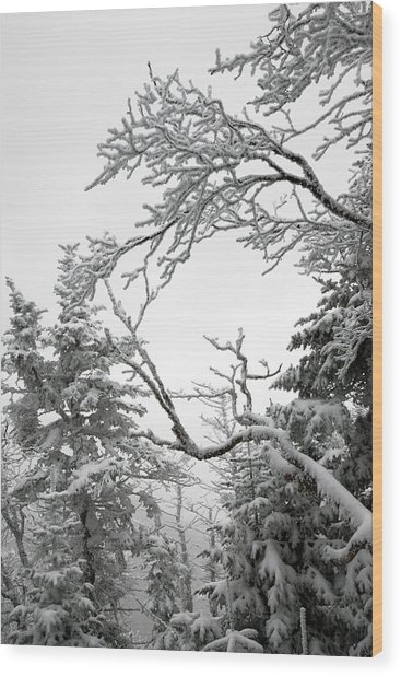 Icy Branches In The Adirondack Mountains Of New York Wood Print by Brendan Reals