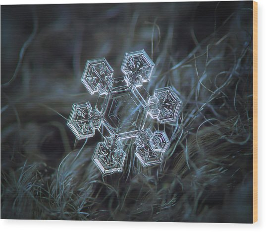 Icy Jewel Wood Print