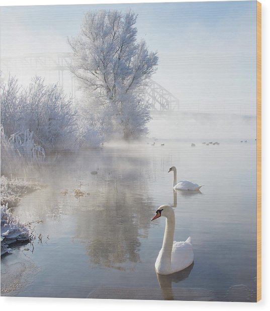 Icy Swan Lake Wood Print