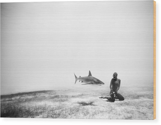 If Sharks Could Fly Wood Print by One ocean One breath