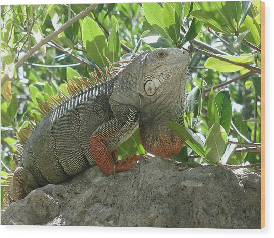 Iguana Daze Wood Print