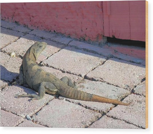 Iguana On The Street Wood Print