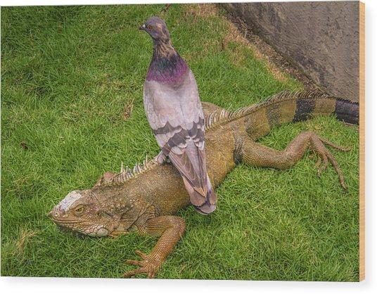 Iguana With Pigeon On Its Back Wood Print