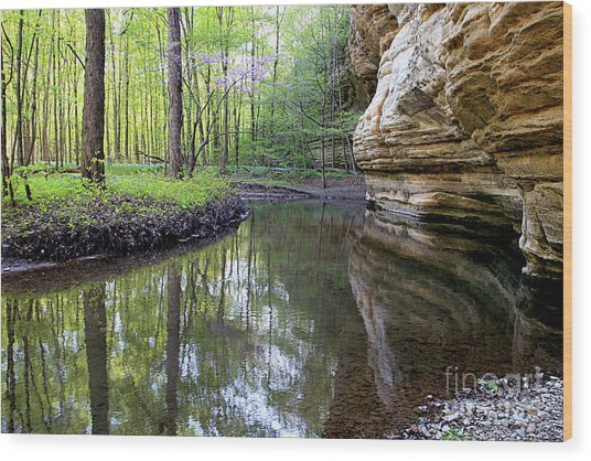 Illinois Canyon In Spring Starved Rock State Park Wood Print