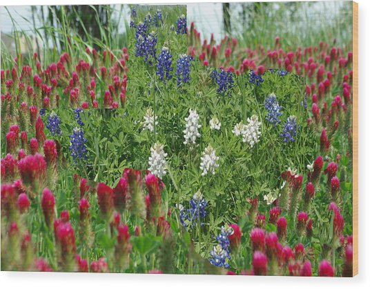 Illusions Of Texas In Red White Blue Wood Print