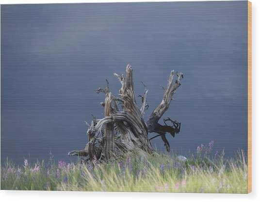 Stump Chambers Lake Hwy 14 Co Wood Print
