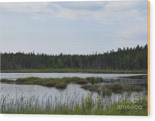Images From Mt. Desert Island Maine 1 Wood Print