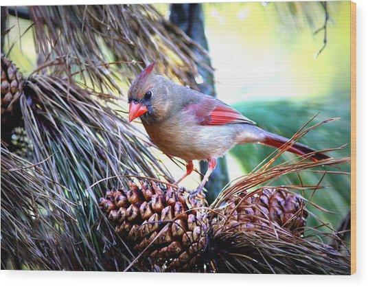Img_0311 - Northern Cardinal Wood Print