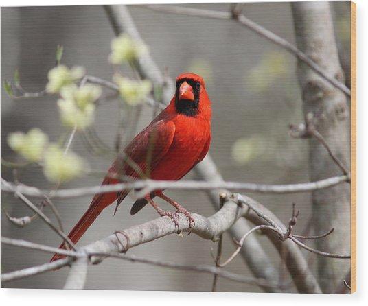 Img_2027-004 - Northern Cardinal Wood Print