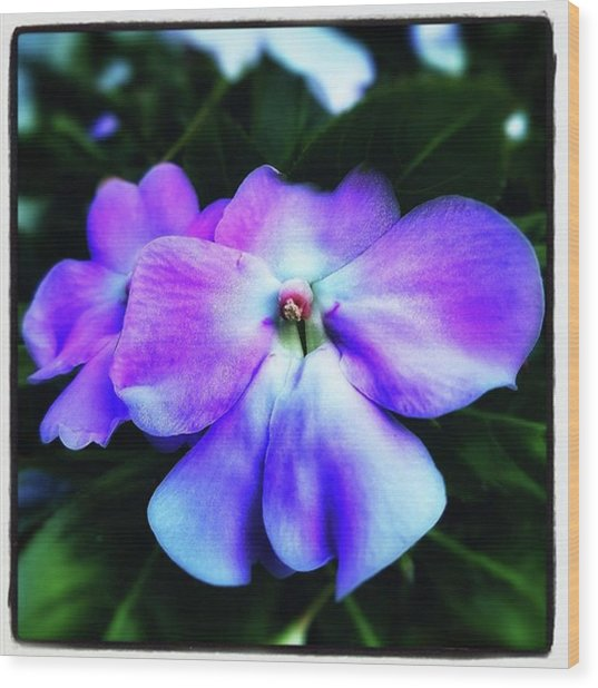Wood Print featuring the photograph Impatiens. Also Known As our Lady's by Mr Photojimsf