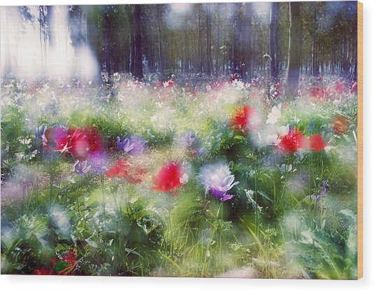 Impressionistic Photography At Meggido 2 Wood Print