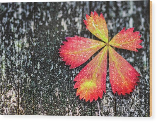 Impressions Of Autumn Wood Print