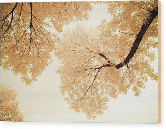 Wood Print featuring the photograph Impressions Of October by John De Bord