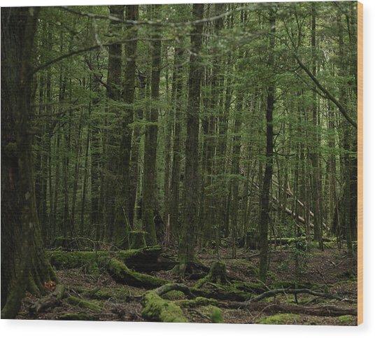 In Fangorn Forest Wood Print