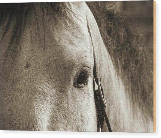 In German Pferd Wood Print by JAMART Photography