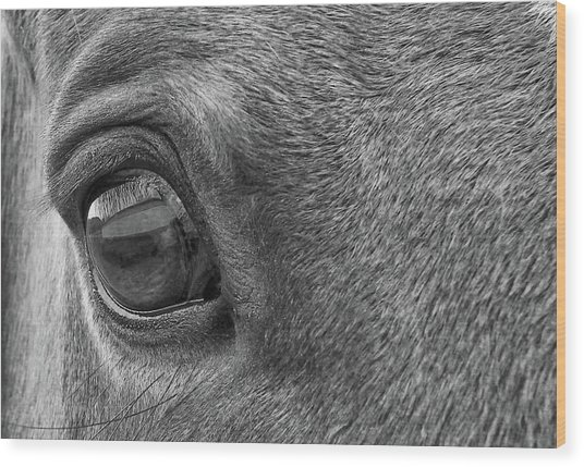 In Italian Cavallo View Wood Print by JAMART Photography