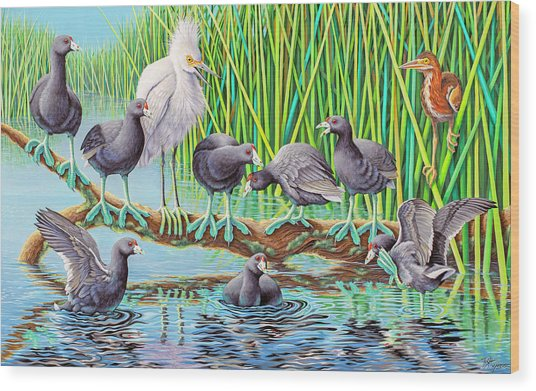 in Kahoots with Coots Wood Print