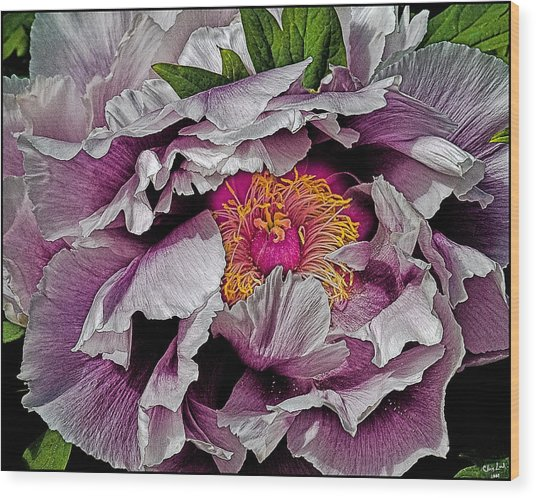 In The Eye Of The Peony Wood Print