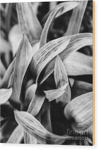 In The Garden _ Tulip Leaves Wood Print