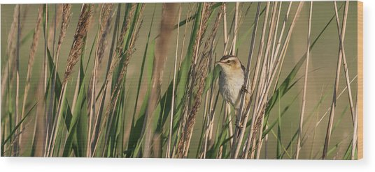 In The Reeds Wood Print