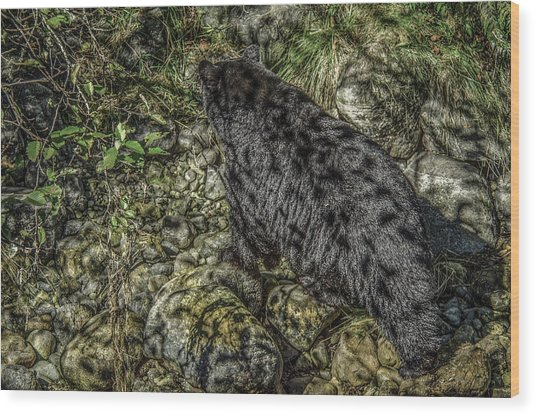 In The Shadows Black Bear Wood Print