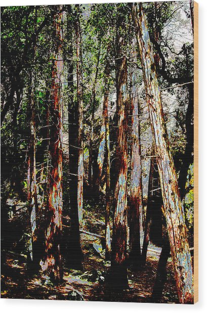 In The Trees Wood Print by Tim Tanis