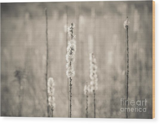 In The Wild Grass Wood Print