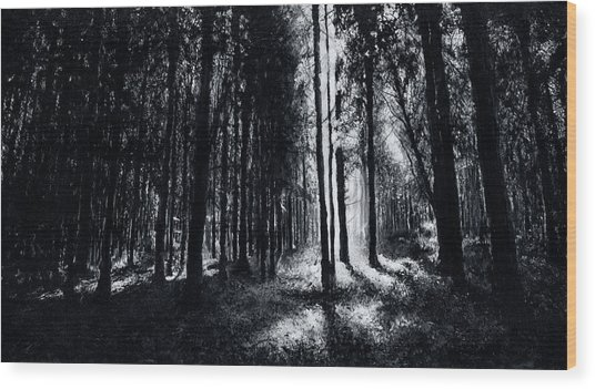 In The Woods 6 Wood Print