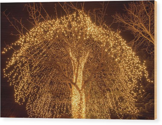 Incandescent Branches  Wood Print