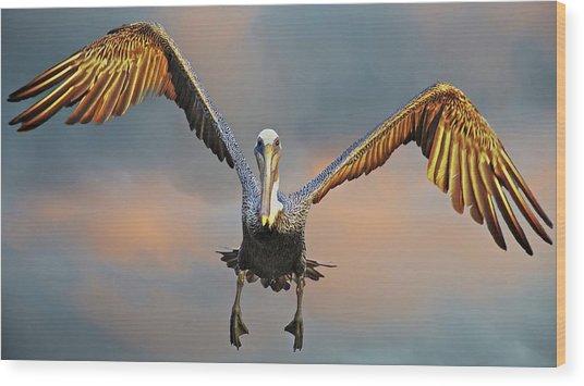 Incoming II, California Brown Pelican Wood Print