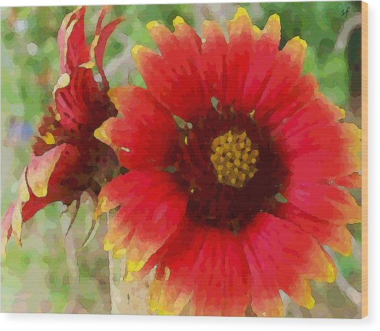Wood Print featuring the digital art Indian Blanket Flowers by Shelli Fitzpatrick