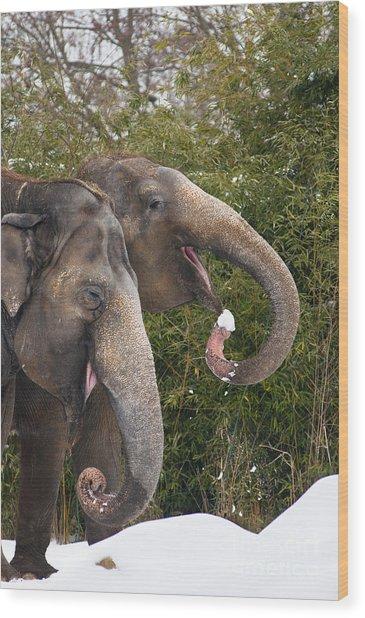 Indian Elephants Eating Snow Wood Print