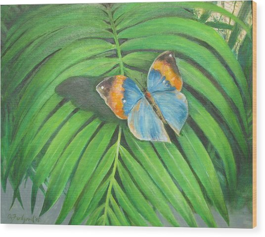 Indian Head Butterfly Wood Print