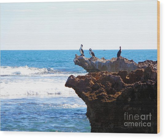 Indian Ocean Birds Resting On Rocks Wood Print