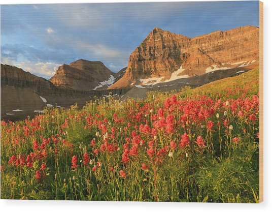 Indian Paintbrush On Timpanogos. Wood Print