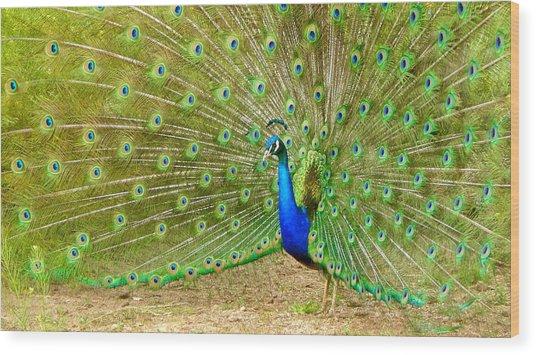 Indian Peacock Wood Print