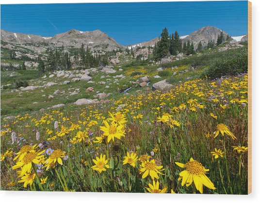 Indian Peaks Summer Wildflowers Wood Print