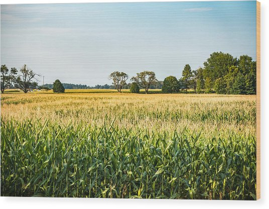 Indiana Corn Field Wood Print