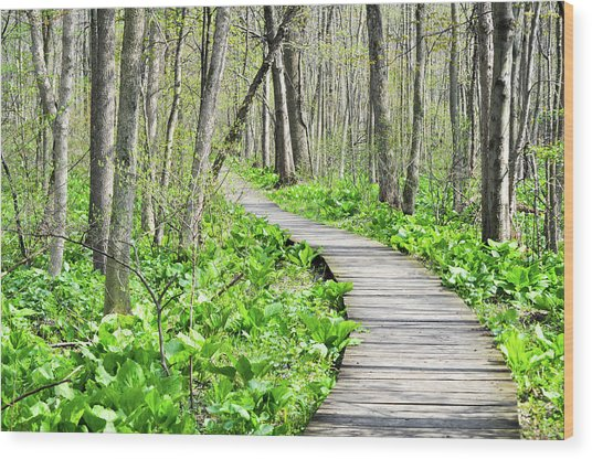 Indiana Dunes Great Green Marsh Boardwalk Wood Print