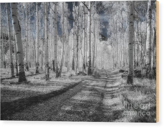 Infrared Aspens Wood Print