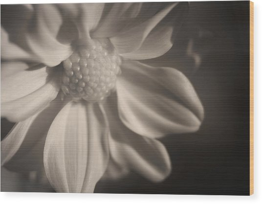 Infrared Mum Wood Print