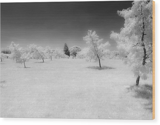 Infrared Peach Orchard Wood Print