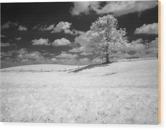 Infrared Tree Wood Print