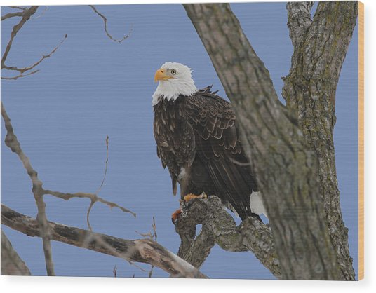 Inqusitive Look Wood Print by Dave Clark