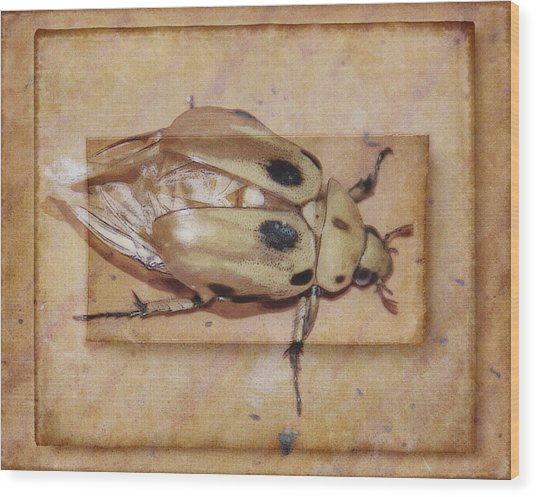 Insect On Wooden Board Wood Print