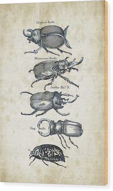 Insects - 1792 - 01 Wood Print
