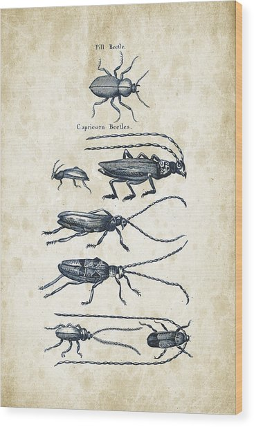 Insects - 1792 - 03 Wood Print