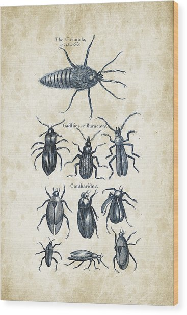 Insects - 1792 - 04 Wood Print