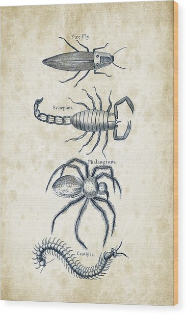 Insects - 1792 - 19 Wood Print