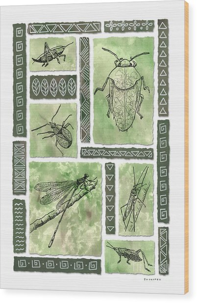 Insects Of Hawaii I Wood Print